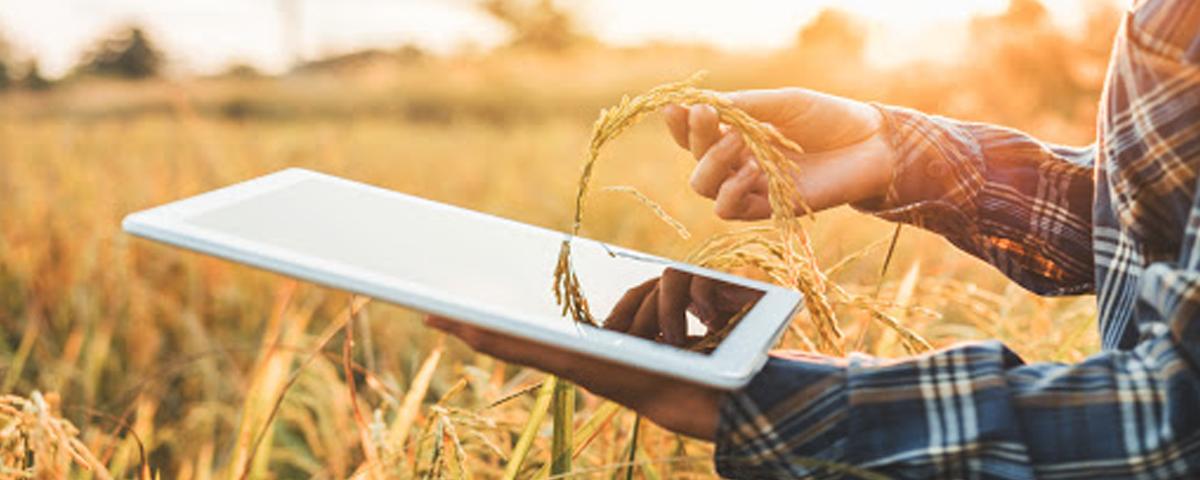Inovação para transformar o setor agropecuário do interior de Pernambuco